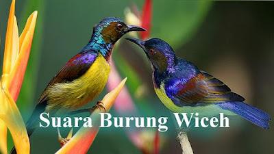 Burung-madu kelapa atau umum disebut Kolibri Kelapa di Indonesia. Dalam bahasa Inggrisnya burung ini dikenal dengan Brown-throated Sunbirds (Anthreptes malacensis)