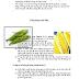 DỰ ÁN KINH DOANH Vi Corn – Flavour your life