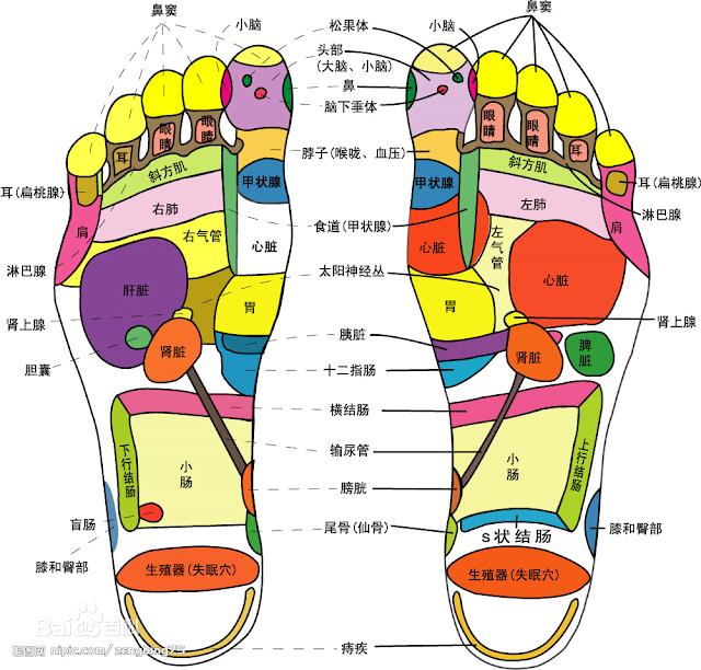 脚底反射區位置 - 脚底反射區圖解 | Source:baike.baidu.com/item/脚底反射区