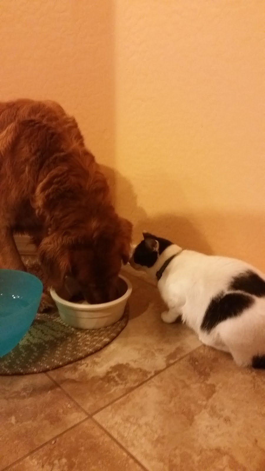 My Dog Ate Cat Food Will He Be Okay