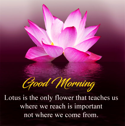 Good Morning Flowers Images Download free for Lover