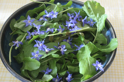 Rocket and Borage Salad