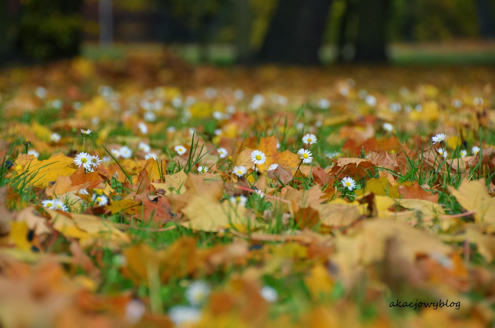 Pierwszy dzień jesieni.