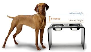 estabilizador de coluna para cães