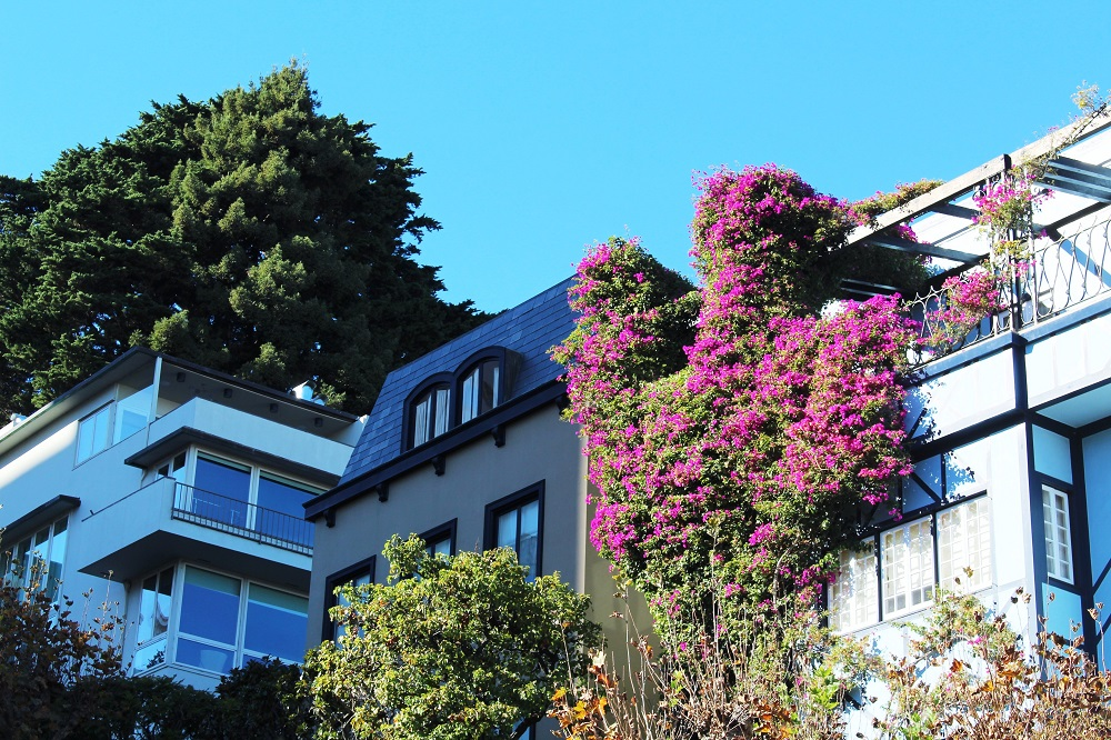 Lombard Street houses, San Francisco - California travel blog
