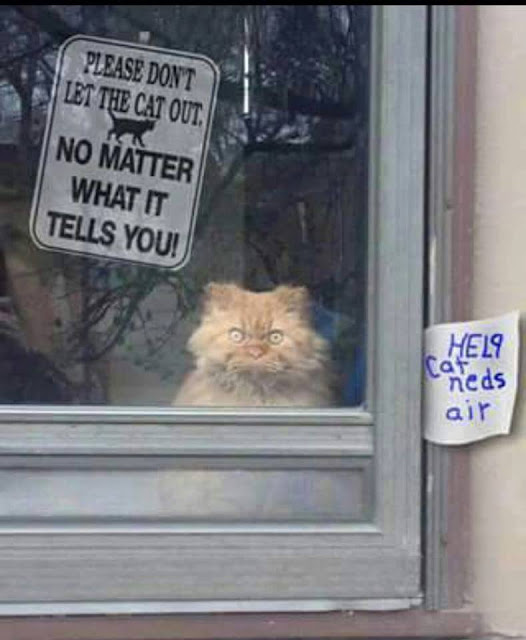 Funny Don't Let The Cat Out Sign Joke Picture