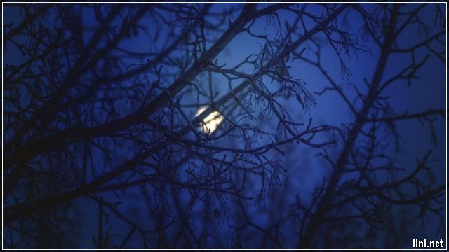 Đêm trăng Mùa Đông