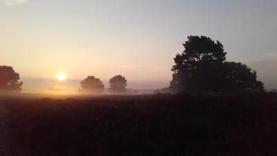 stream img - Καιρός για 31/1 - 2/2 : Νοτιάδες και ομίχλες.