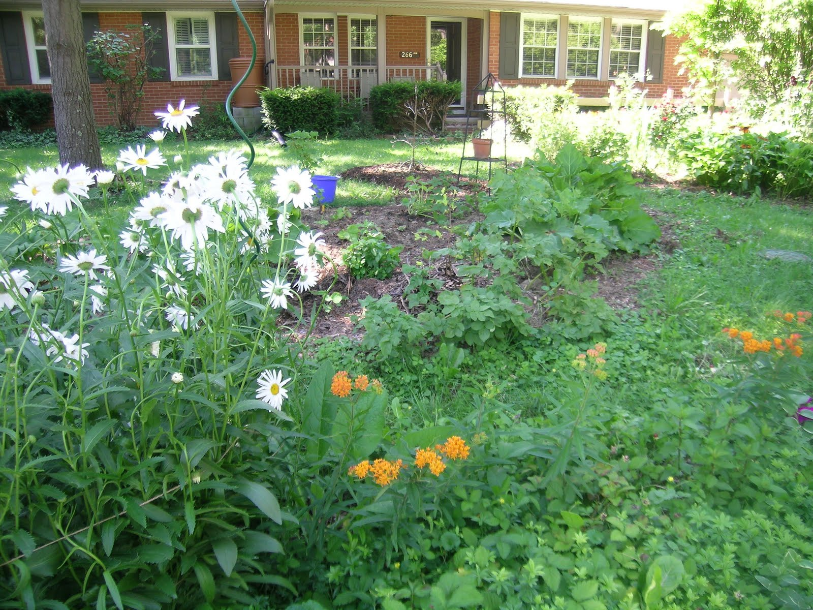 Finding Our Family Footprint Front Yard Edible Garden