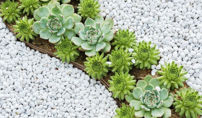 Jardim de pedras faça o seu Verde em Folha # Decoração De Jardins Com Pedras E Flores