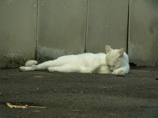ずっと毛づくろいしている白黒猫
