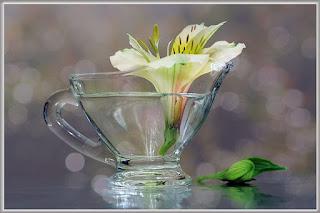 гербприй, как сушить растения для гербария, как сушить растения для поделок, как сушить растения для букетов,  Быстро и не очень высушить листья для поделок и аппликацмй - советы и рекомендации, Как быстро и правильно высушить листья для поделок и аппликаций, Воздушная сушка растений без подвешивания, Воздушная цветов сушка в вазе с водой, Воздушная сушка цветов с подвешиванием, как высушить цветы для букетп, как правильно высушить здаки, как правильно высушить здаковые ратения, Общие правила сушки цветоа, Объемная сушка цветов в обертке, Гигроскопическая вата, Парафинирование живых цветов и листьев, Порошковая или объемная сушка растений, Для каких цветов нужна порошковая сушка, Сохранение растений в глицерине, Сушка растений, листьев и цветов в книгах, Сушка растений под прессом, Экспресс-сушка листьев утюгом, Экспрессс-сушка цветов в микроволновой печи, Общие правила сушки для лучшего сохранения формы и окраски лепестков, Быстро и не очень высушить листья для поделок и аппликацмй - советы и рекомендации http://prazdnichnymir.ru/