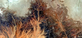 Autumn Stone tree plant fantasy,Abstract Naturalism,abstract photography deserts of Africa from the air,abstract surrealism,mirage in desert,fantasy forms and colors in the desert,flowers,leaves,roots