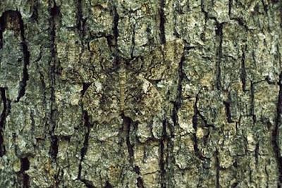 لغز لأقوياء الملاحظة فقط - هل يمكنك إيجاد الفراشة الواقفة على الشجرة ؟!
