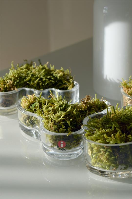 Grön mossa i Alvar Aalto skålar från Iittala | www.var-dags-rum.se