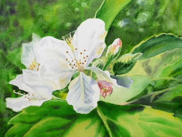 Цветы и цветочные натюрморты акварелью. Irina Sztukowski 11