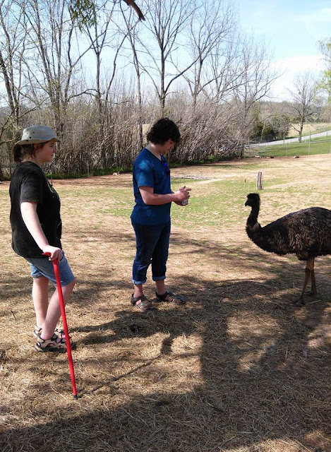 Feed Emus things to do with kids in Kentucky