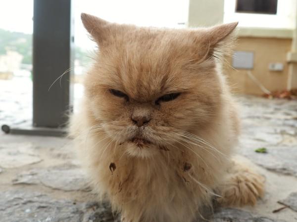 unhealthy stray cat