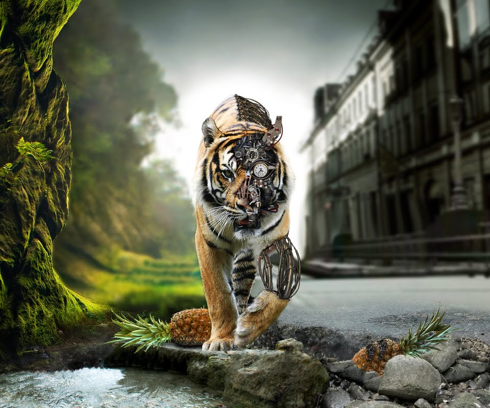 960x800px Animated Tiger Wallpaper