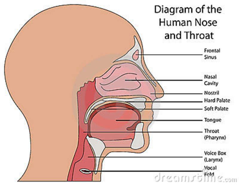 Peninsula Ear Nose And Throat