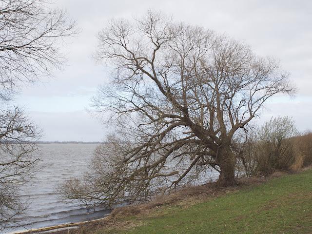 Am südlichen Ufer des Dümmer