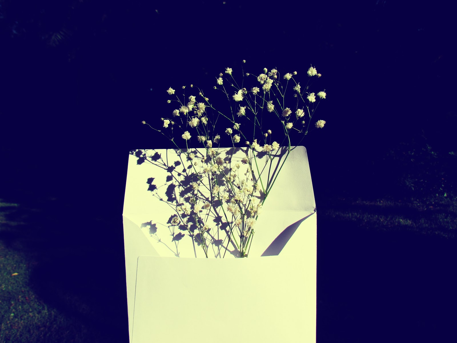 Nature in an Envelope + White Envelope Stuffed With White Baby's Breath Flowers Display Gloom and Glow Shadow Background