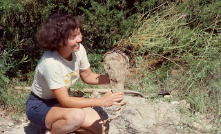 Ipomoea leptophylla root tuber
