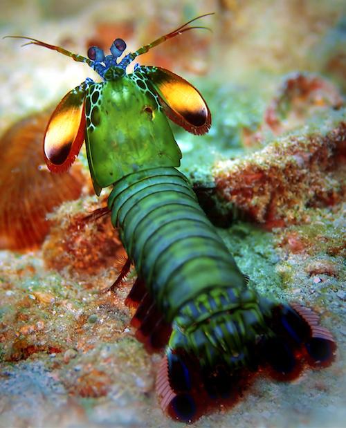 Il ne s'agit pas d'une espèce extra-terrestre mais d'une mante, qui peut rapidement présenter un danger mortel pour les petits poissons de l'aquarium. Il est conseillé de les héberger dans un aquarium spécifique. Photo : Kjersti - Fotolia