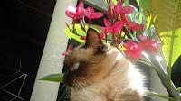 Minha gatinha Safira e a importância de um animal de estimação, as responsabilidades e o projeto de chipagem de gatos e cachorrros em Barretos-SP - Gata Safira no jardim de perfil