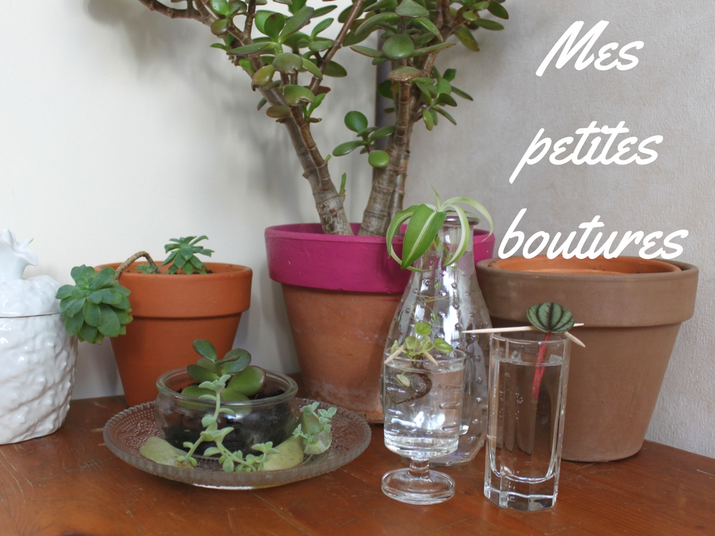 Mandy bla bla mes petites boutures for Petites plantes vertes
