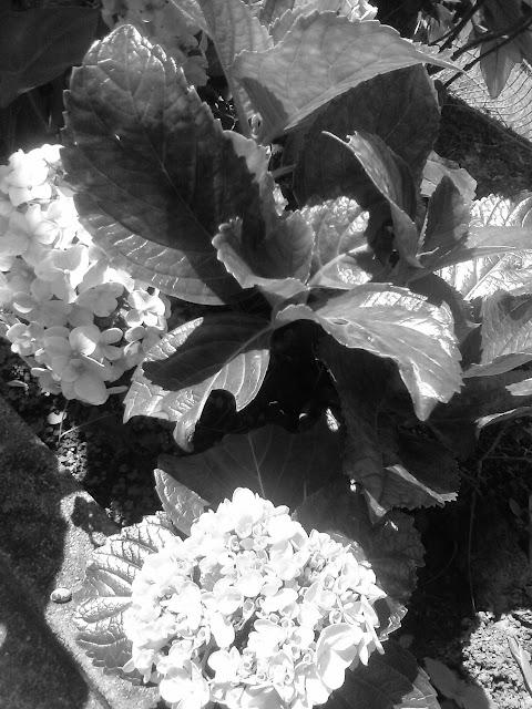 Flores em branco e preto