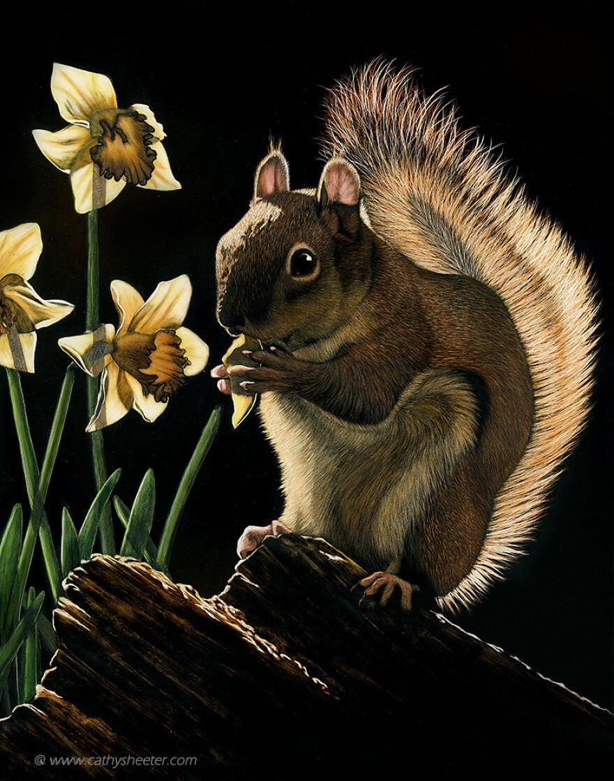 13-Red-Squirrel-Cathy-Sheeter-Wildlife-Scratchboard-Drawings-www-designstack-co