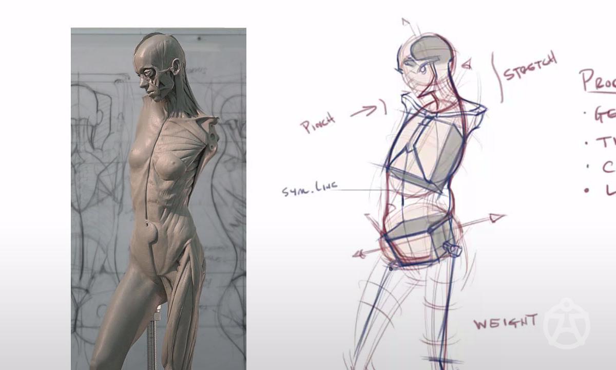 figuredrawing.info news: Anatomy tools - Lvl 1 workshop photos