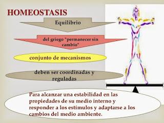 Resultado de imagen para homeostásis español
