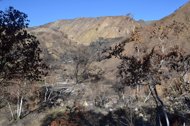 burned creek bed