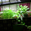 How To Start Your Own Aquaponics Garden