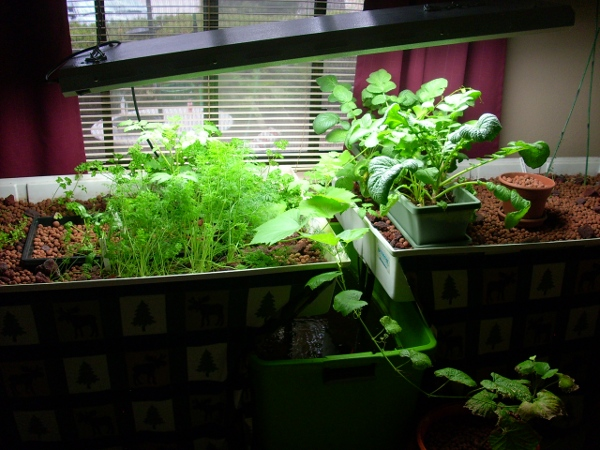 Do It Yourself Home Design: Aquaponic Gardening System : Aquaponic Farming The