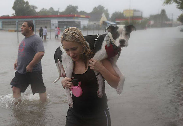 5 Powerful Photos From Hurricane Harvey. Hereos saving Dogs.