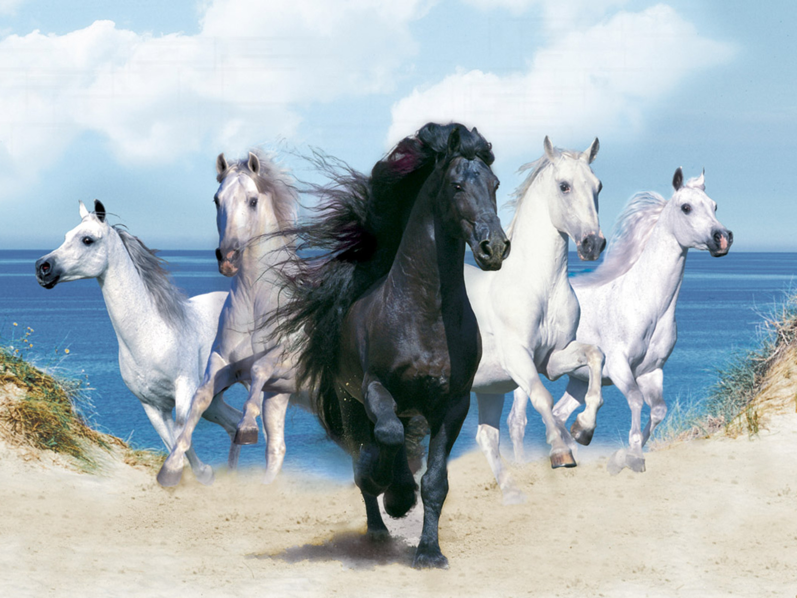 All Animals Wallpaper: Wallpapers: Lovely Animals Wallpapers