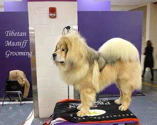 Tibetan Mastiff Grooming, Dog Grooming All steps, Mastiff Dog Grooming, Pet Grooming,