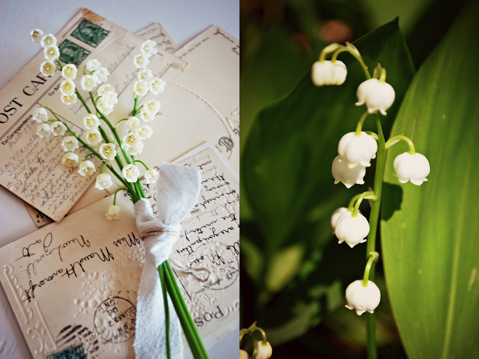 Sylvias simple life the simple pleasure of lily of the valley dear friends i hope you find lilies of the valley blooming in your garden or in your neighbors garden or in the nearby park and you would stop to smell izmirmasajfo