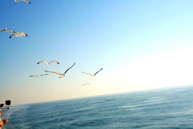 mare, acqua, uccelli, gabbiani, volatili, nuvole, cielo