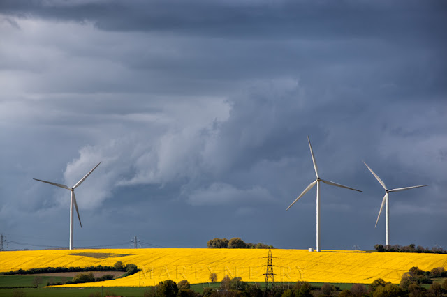 Bright yellow rape field in the afternoon sunshine with wind turbines and a brooding sky