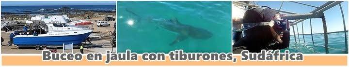 Buceo-tiburones-sudáfrica