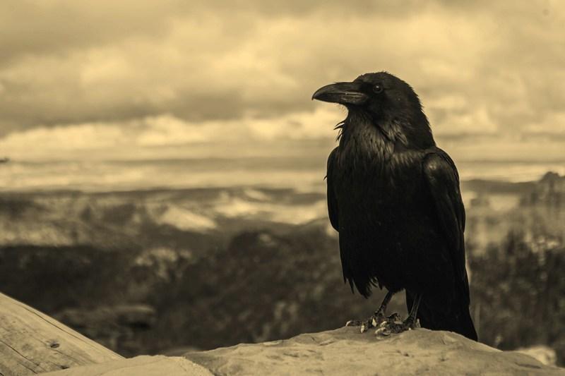 Cool story, Poe albo o 10 opowiadaniach E. A. Poego
