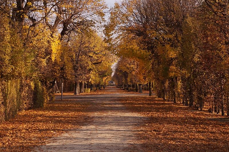 Schlosspark Schönbrunn Wien im Herbst // Schönbrunn park Vienna in autumn