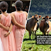 'Bridesmaids tak guna datang nak melawa, baik jadi lembu'
