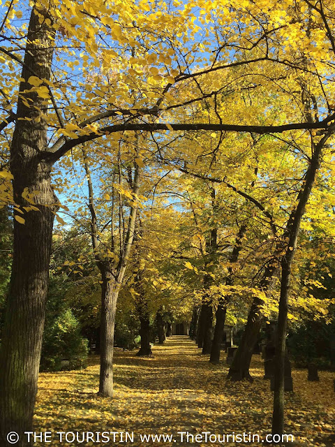 Path, where vanishing point perspective draws you in, below trees in bright yellow autumn foliage.
