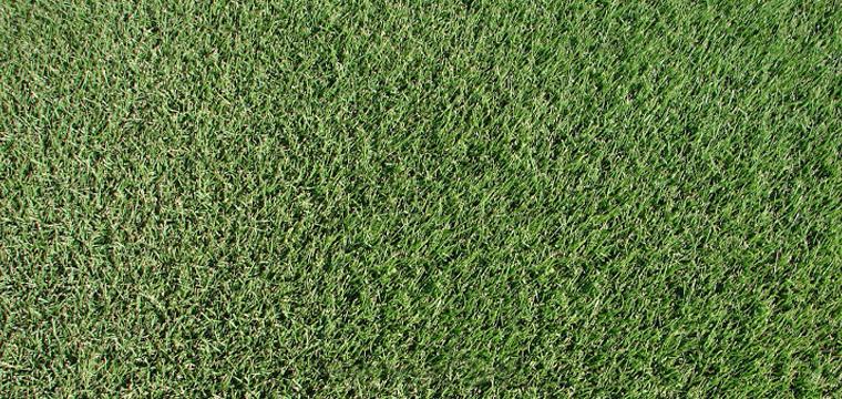 Zoysia Grass Vs Bermuda Best Manual Lawn Aerator