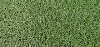 Zoysia Grass Vs. Bermuda